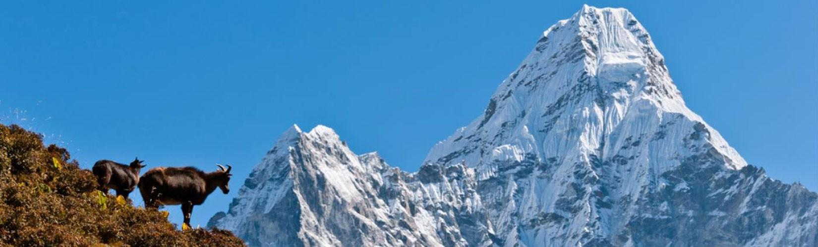 Mountains and Monasteries Trek